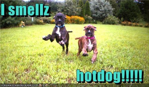 Cheezburger Image 5433298944