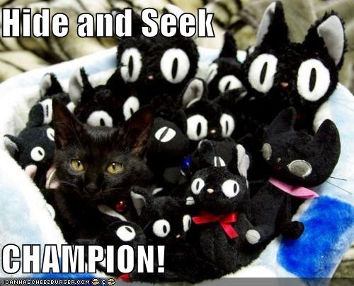 basket caption captioned cat Champion hide hide and seek hiding seek stuffed animals - 5433649920