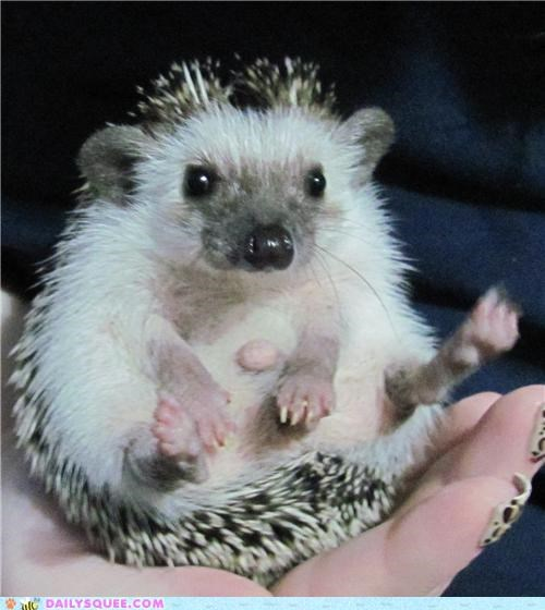 camera Hall of Fame hedgehog photo op pose posing reader squees - 5433896704