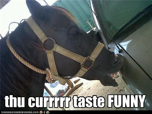 car derp feed horse taste