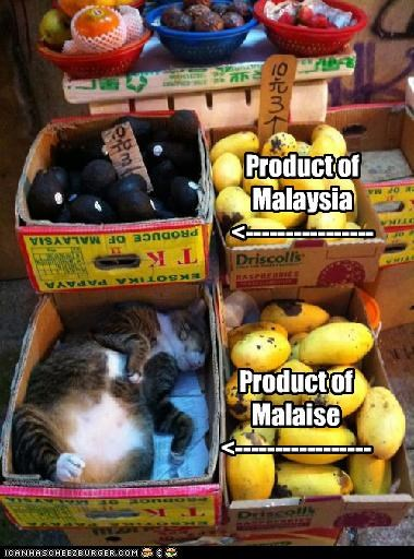 box,caption,captioned,cat,fruit,malaise,malaysia,product,pun,similar sounding,sleeping