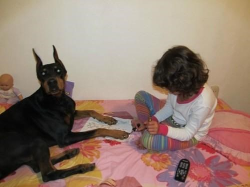 doggeh omg-adorbz - 5434952192
