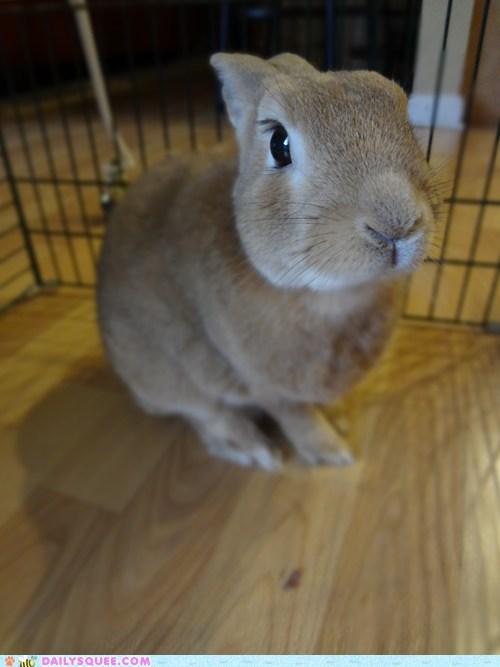 bunny camera happy bunday patience pose posing rabbit reader squees smelling waiting - 5435212032