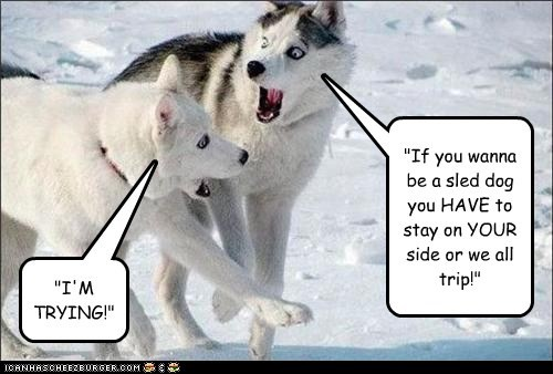 """""""If you wanna be a sled dog you HAVE to stay on YOUR side or we all trip!"""" """"I'M TRYING!"""""""