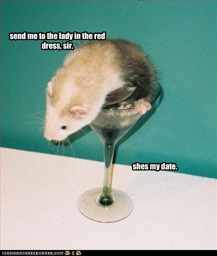 alcohol date drink ferret online dating - 5435686400