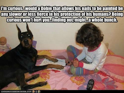 I'm curious...would a Dobie that allows his nails to be painted be any slower or less fierce in his protection of his humans? Being curious won't hurt you...finding out, might...a whole bunch.