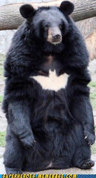 awesome batman bear Random Heroics wtf - 5436227840