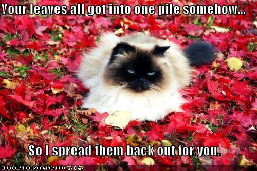 caption,captioned,cat,fix,fixed it,helping,himalayan,leaves,pile,spread,youre-welcome
