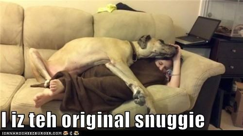 asleep couch cuddle flop human laying down sleep sleeping snuggie snuggle tired whatbreed - 5436314624