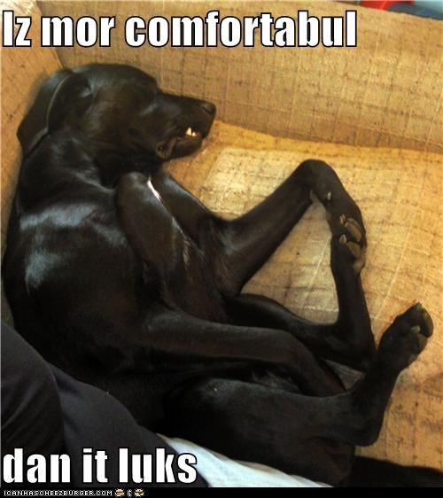 asleep Black Lab comfortable couch sleep sleeping snoozin - 5436328960