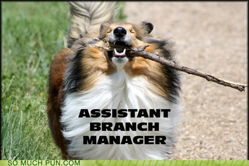 assistant branch business dog dogs double meaning Hall of Fame literalism lolwut manager - 5436332032