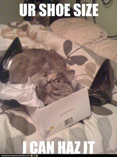 caption captioned cat do want face i can has lolwut shoe size your - 5436758784
