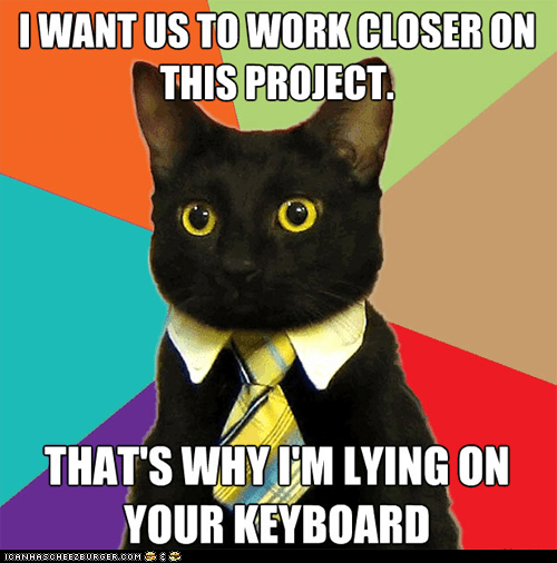 annoying Business Cat computers keyboards lying down memecats Memes projects