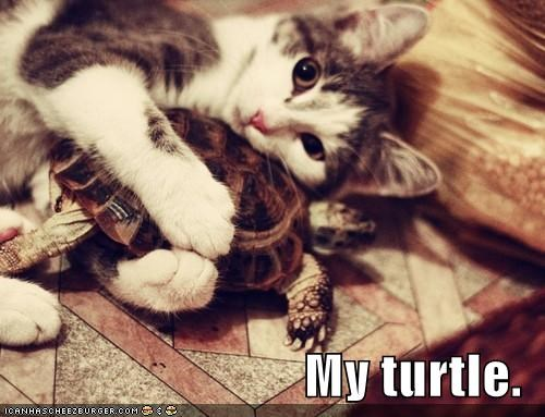 caption,captioned,cat,holding,hugging,mine,my,possessive,turtle