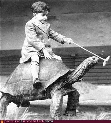 faster riding tortoise turtle wtf - 5438204672