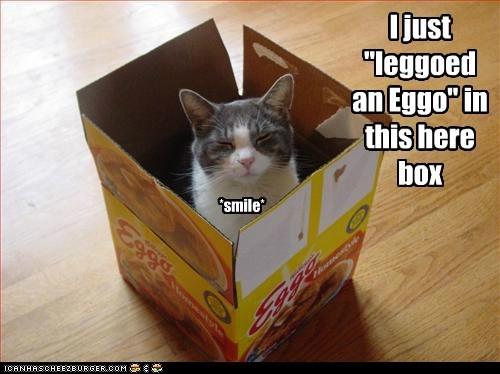 box caption captioned cat eggo insinuating leggo mean noms payback waffle waffles - 5438360576