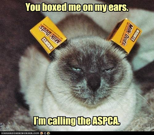 aspca box boxed boxes calling caption captioned cat ears me milk duds pun siamese you