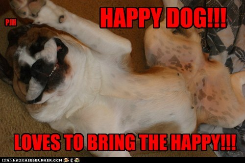 HAPPY DOG!!! LOVES TO BRING THE HAPPY!!! PJH