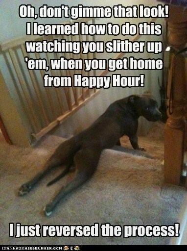 confused frog legs happy hour i-have-no-idea-whats-going-on pit bull pitbull silly silly dog stairs weird wtf - 5438712064
