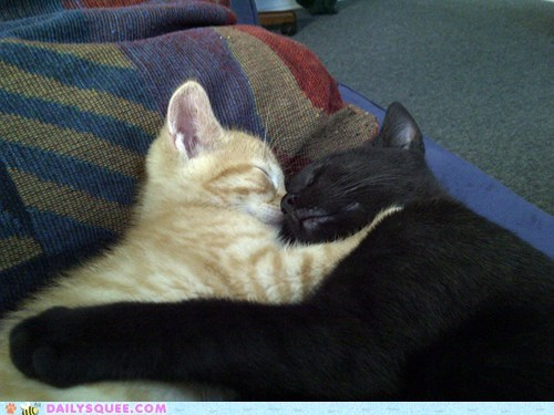 asleep,Babies,baby,buddies,cat,Cats,cuddling,friends,friendship,Hall of Fame,kitten,reader squees,sleeping