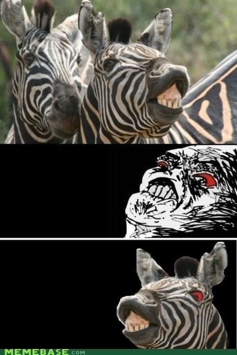 animals animemes faces raisins-super-fuuuu savannah wild zebra - 5440581376