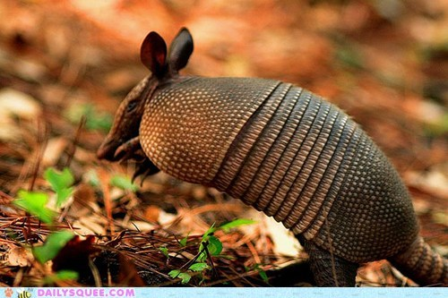 armadillo attempting determination imitating jump jumping squee spree trying