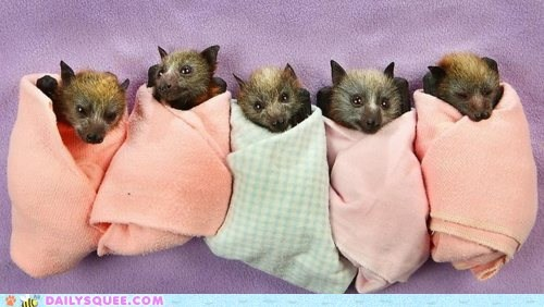 Babies baby bat bats blanket blankets covered orphaned rescued sheltered swaddled swaddling towel towels unbearably squee warm wrapped - 5440812288