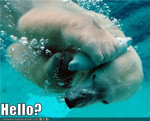 animals bear hello polar bear telephone this is bear this is dog - 5440815104
