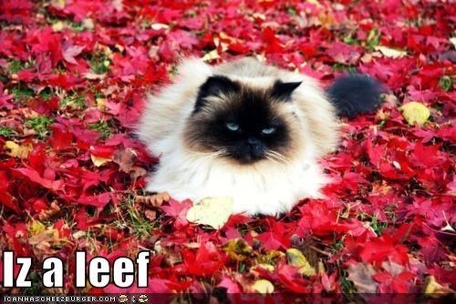 Cheezburger Image 5440980224