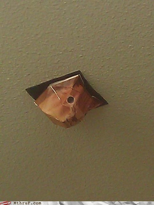 cat is watching,paper ceiling cat,spied on