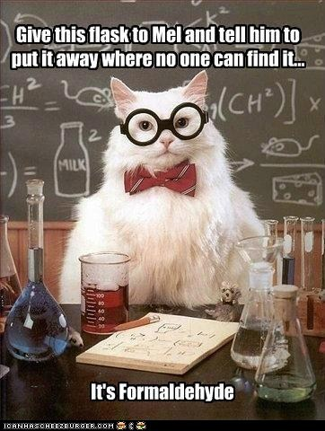 chemistry cat,formaldehyde,hide,hiding,memecats,Memes,puns