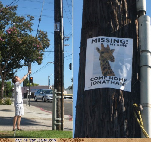 Picture of a sign that has been posted for a missing giraffe, along with the same sign also posted very high up on a telephone pole.