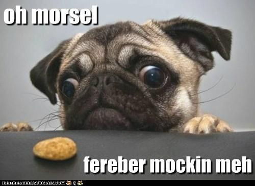 Cheezburger Image 5441449984