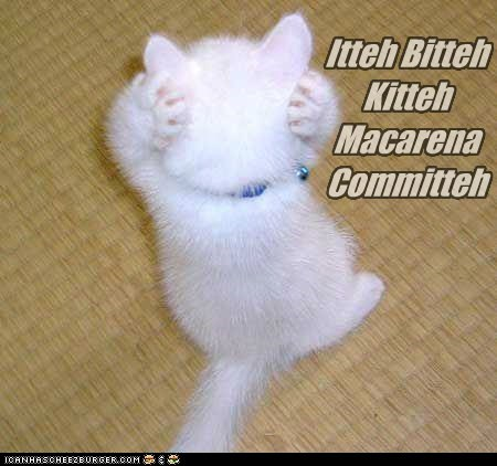 caption captioned cat dance dancing Hall of Fame itteh bitteh kitteh committeh kitten Macarena position posture - 5441916416