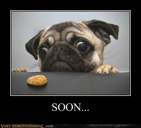 animals,dogs,food,hilarious,pug