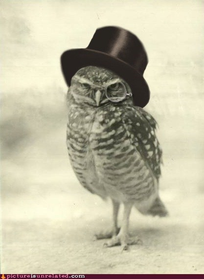 best of week fancy gentleman Owl top hat wtf - 5442259968