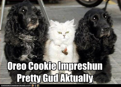 actually,caption,captioned,cat,cookies,dogs,good,impression,oreo,pretty