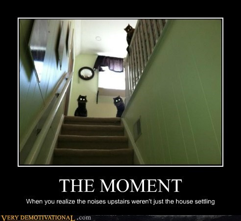 animals Cats hilarious house moment realize scary - 5442549504