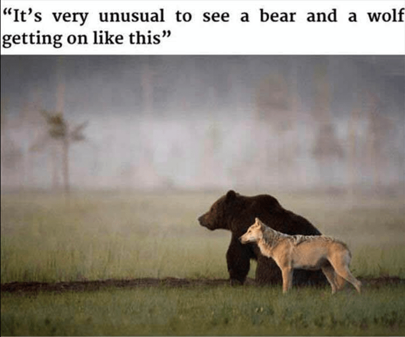 cute bear relationships love funny wolf - 5442565