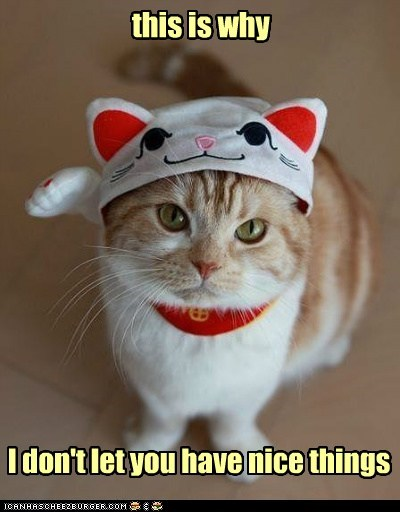 caption captioned cat costume do not want dont dressed up Hall of Fame have let maneki neko nice tabby things this upset why you