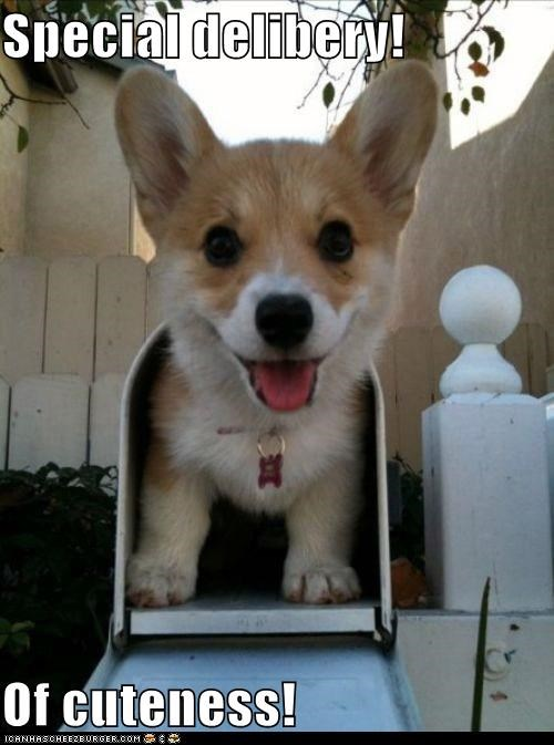 awesome corgi mail mailbox puppy special delivery - 5443194368