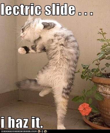 caption captioned cat dance dancing electric electric slide i has slide - 5443216128