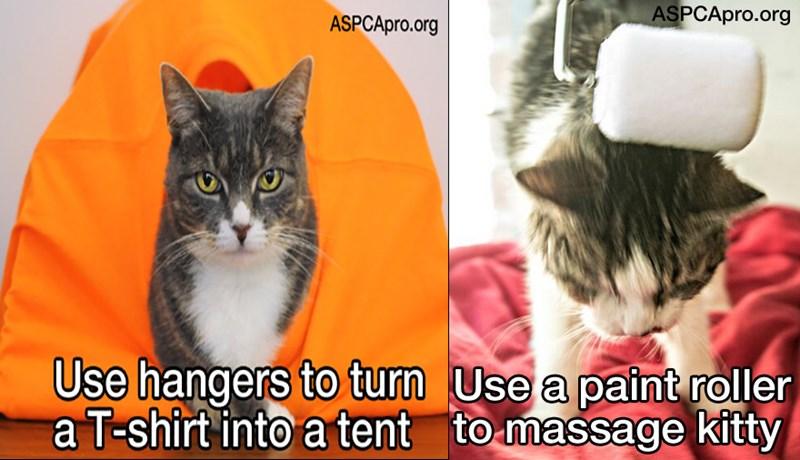 tips pets lifehacks ownership animal shelter animals - 5443333