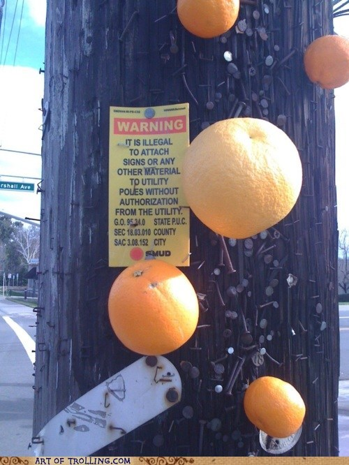 attach,IRL,oranges,pole,signs