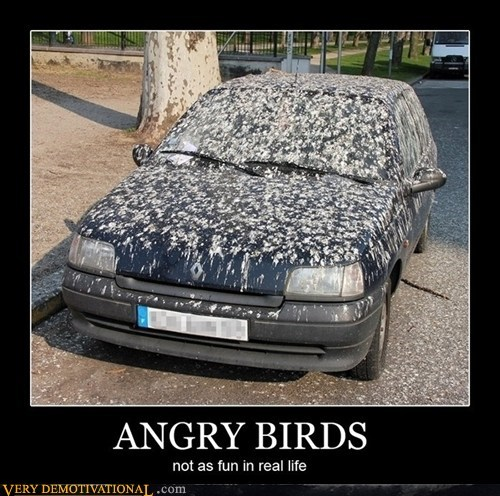 angry birds car hilarious poop