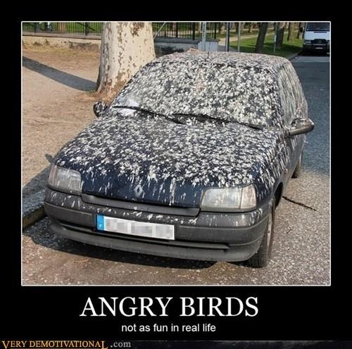 angry birds car hilarious poop - 5443902720