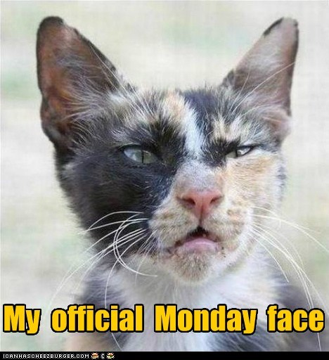 best of the week caption captioned cat do not want face Hall of Fame monday my official - 5443956992