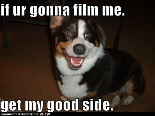 bernese mountain dog corgi film good side happy happy dog mixed breed photograph photography smile smiles smiling