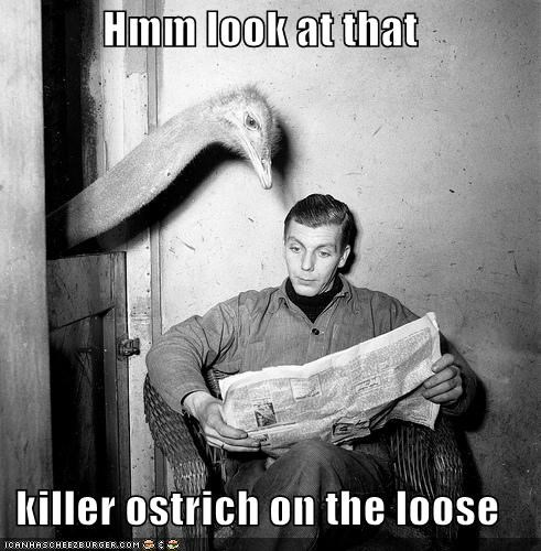 animal funny historic lols ostrich Photo - 5444122624