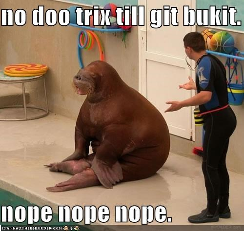 blue bucket blue bukkit lolrus walrus - 5444306944